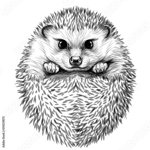 Fotografia, Obraz Hedgehog
