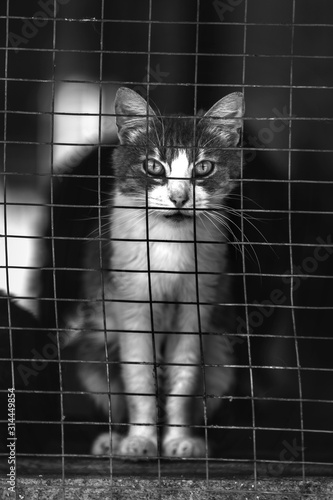 Fotografie, Obraz Homeless cat in a shelter for cats. Animal in the cage