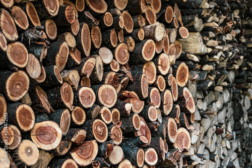 Foto Chopped cherry tree logs stacked up for drying natural background