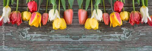 Naklejka na szafę Tulipany na starym drewnianym tle