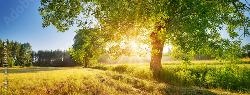 tree foliage in beautiful morning light with sunlight in summer