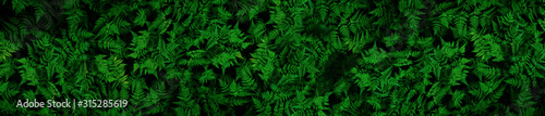 Very detailed and natural, lush, green ferns background