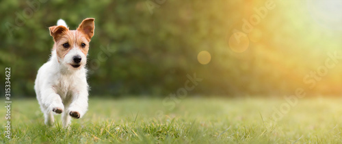 Photo Spring, summer concept, playful happy pet dog puppy running in the grass and lis