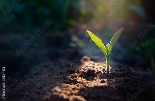 Growing plant,Young plant in the morning light on ground background Fototapeta