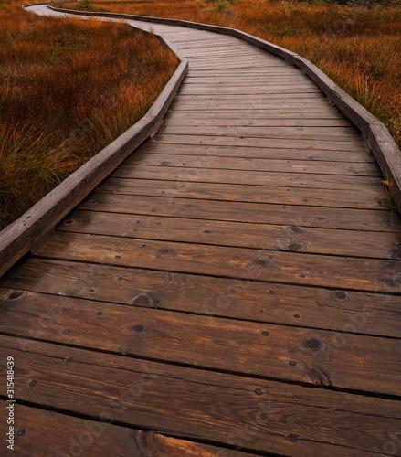 Photo Rainy autumn day on Bog Trail, Cape Breton Highlands National Park, Nova Scotia,