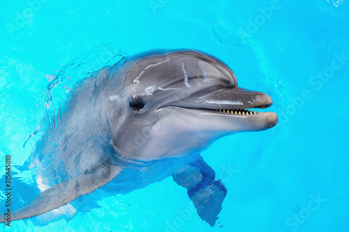 Slika na platnu happy smiling bottlenose dolphin playing in blue water in sea.