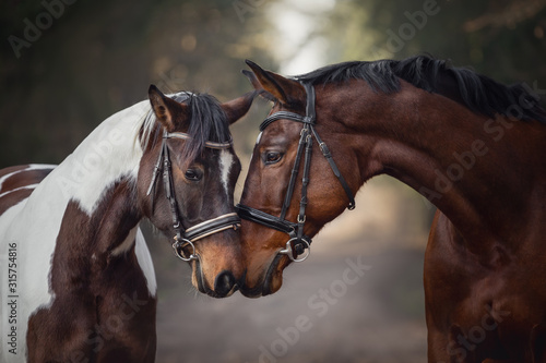 portrait of stallion and mare horses in love nose to nose sniffing each other on road in forest background