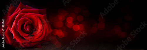 Wallpaper Mural Abstract flower banner with red rose on black background, bokeh lights - Valent