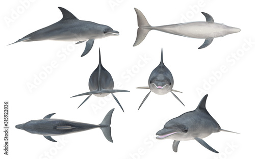 Canvas Print Multiple angle views of bottlenose dolphin with 6 different view isolated white