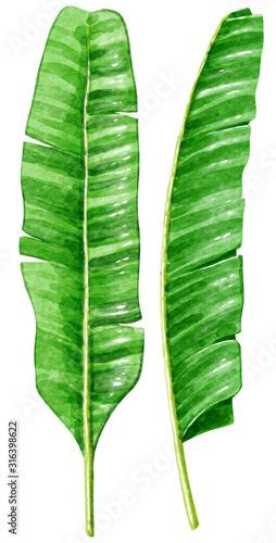 Naklejki na drzwi Liść bananowca w ilustracji akwareli
