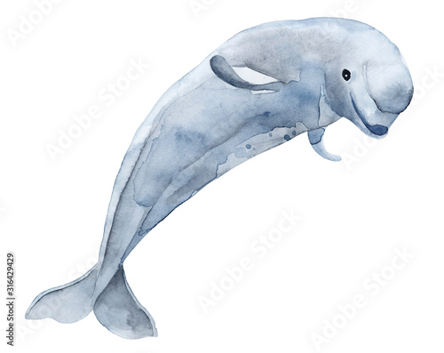 Leinwand Poster Beluga toothed whale from the family of narwhal