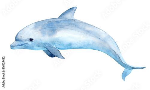 Canvas-taulu Cute dolphin.