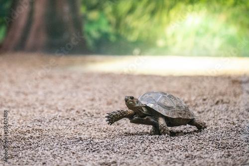 Photo turtle step