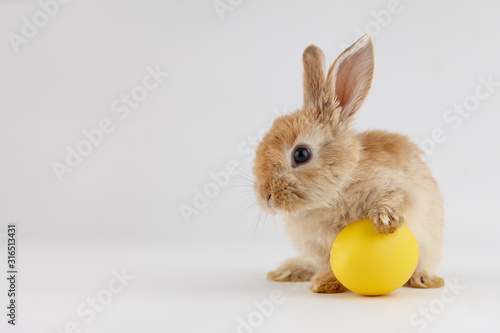 Leinwand Poster Easter bunny rabbit with egg on gray background