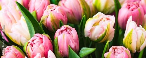 Photo Fresh rosy tulips closeup