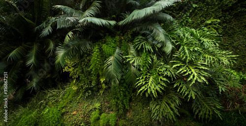 Lush vegetation in a tropical forest