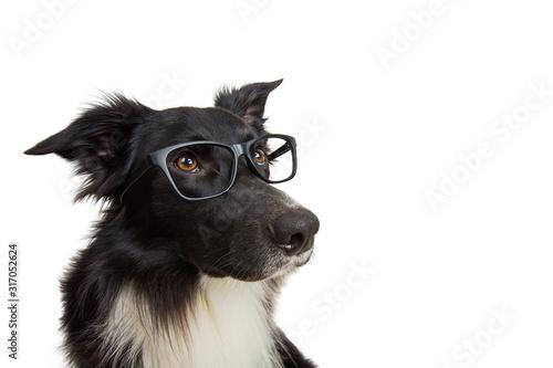 Slika na platnu Close up portrait of funny dog wearing glasses