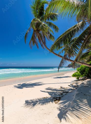 Tropikalna, piaszczysta plaża z palmami kokosowymi i turkusowym morzem na karaibskiej wyspie.