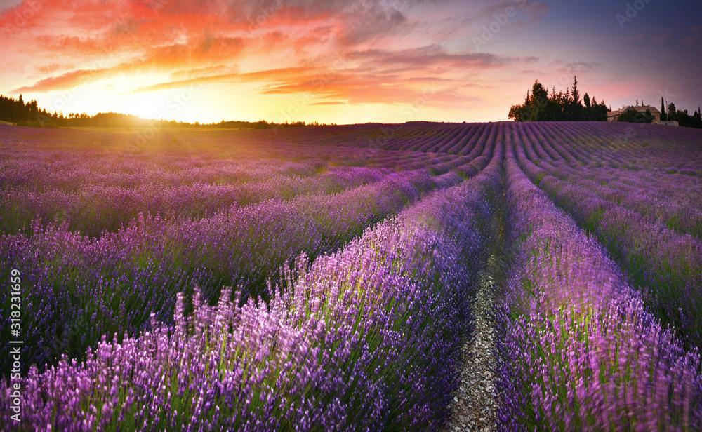 View of lavender field at sunrise in Provence, France <span>plik: #318231659   autor: denis_333</span>
