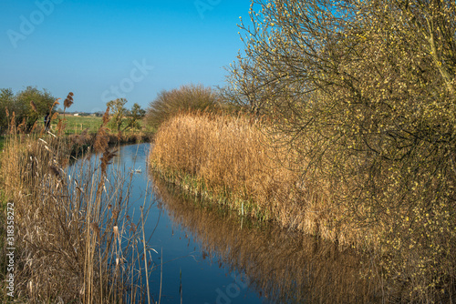 Canvastavla Waterway and reed beds at Wicken Fen Nature Reserve in Cambridgeshire, East Anglia, England, UK