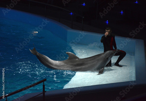 Dolphin training. The man and the dolphin. Photo Image