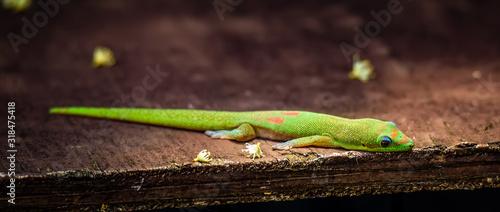 Fotografia Close-Up Of Lizard On Wood