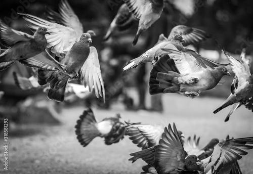 Canvas Close-Up Of Pigeons Flying