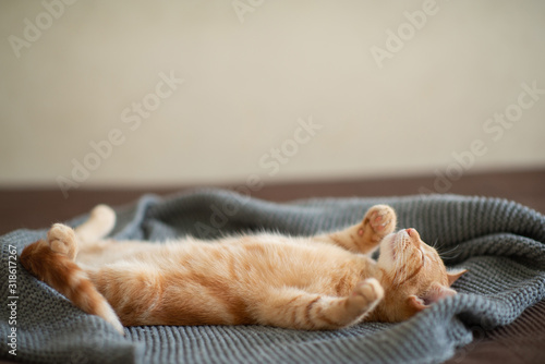 Wallpaper Mural Cute red kitten with classic marble pattern sleeps on the back on sofa