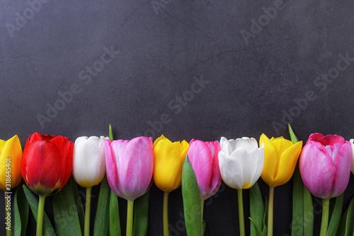 wielobarwne-tulipany-na-ciemnoszarej-scianie