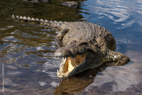Canvas Print HIGH ANGLE VIEW OF crocodile in river