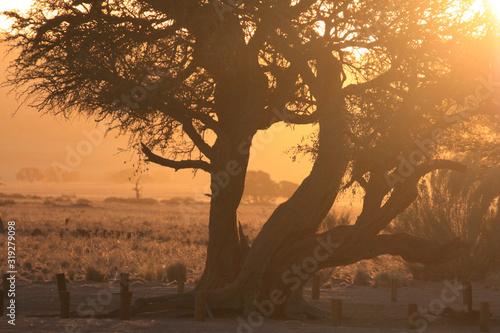 afrkański krajobraz z drzewem o zachodzie słońca