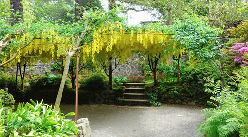 Photo Beautiful british landscaped gardens with laburnum in full blossom, selective fo