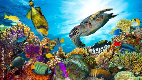 Cuadros en Lienzo colorful coral reef with many fishes and sea turtle