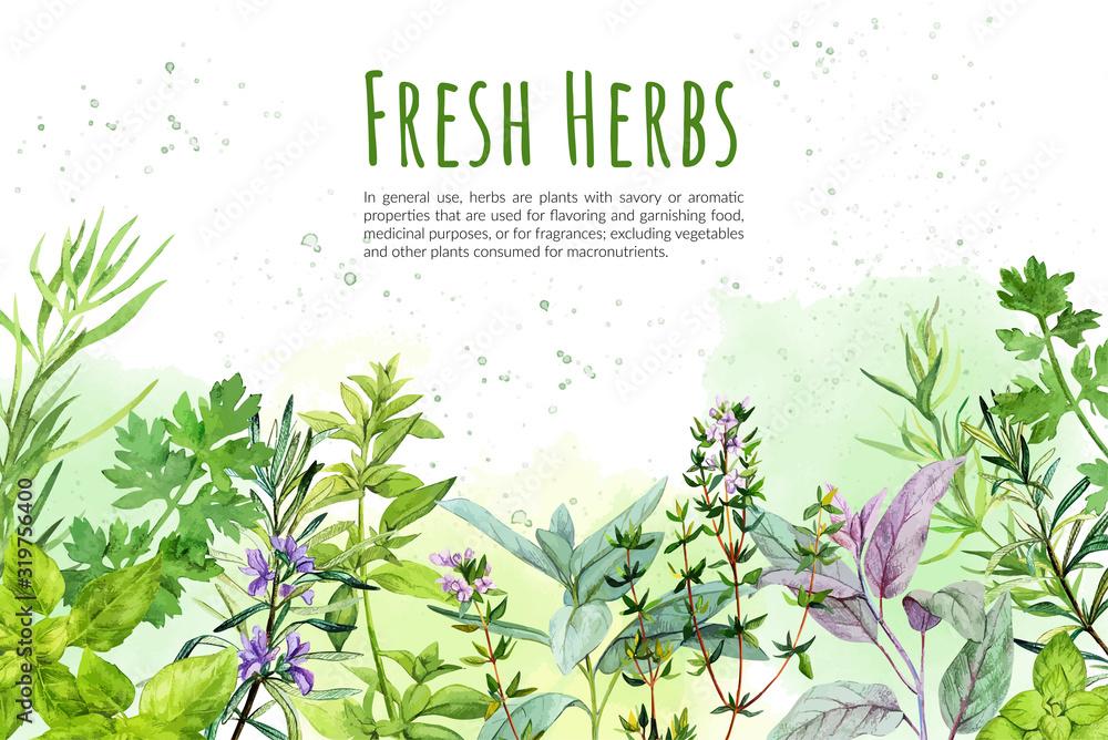 Watercolkor bg with culinary herbs and plants <span>plik: #319756400   autor: nurofina</span>