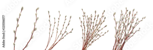 Willow twigs isolated on white. without shadow Fototapeta