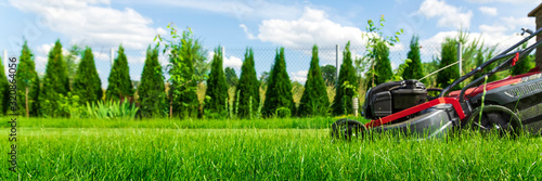 Canvas Print Lawn mower cutting green grass in backyard, green thuja trees on background