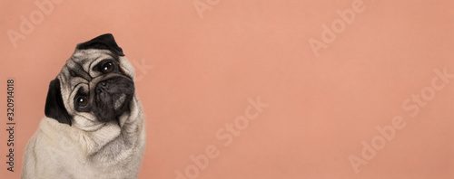 Foto banner with cute pug puppy dog, sitting down, listening while tilting head, in f