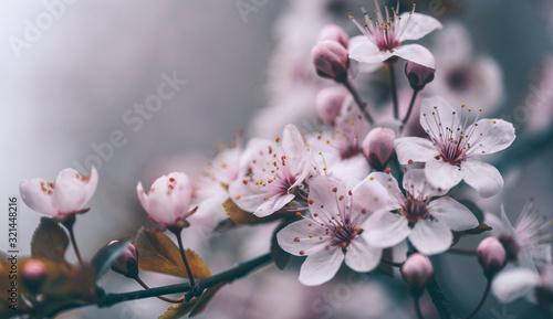 Fotografija Closeup of spring blossom flower on dark bokeh background