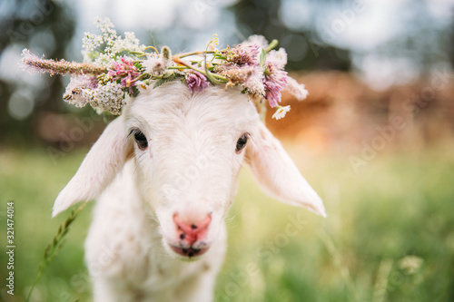 Canvas Print Baby lamb with flower crown