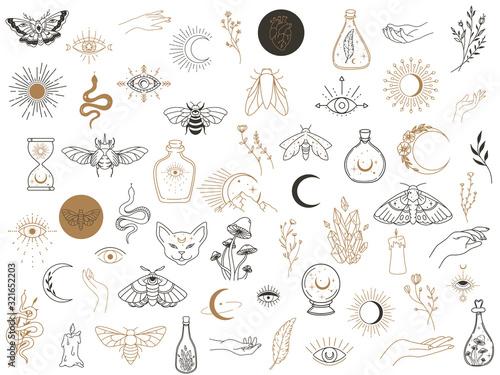 Fotografie, Obraz Vector witch magic design elements set