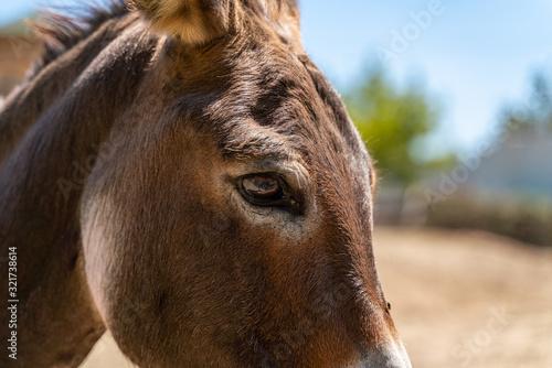 Obraz na plátně Donkey eye