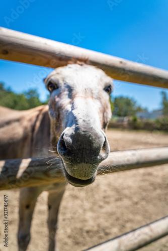 Obraz na plátně Two donkeys