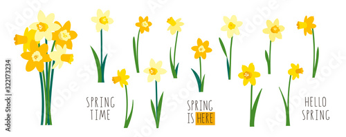 Tablou Canvas Vector set of yellow daffodils isolated on white background
