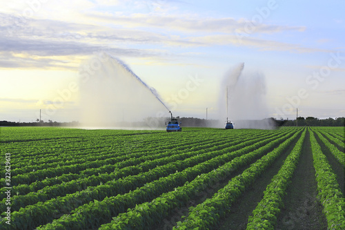 Wallpaper Mural Irrigation of farmland to ensure the quality of the crop