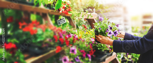 woman pick petunia flower pot from shelf at garden plant nursery store. copy space