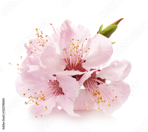 Leinwand Poster Beautiful Pink Cherry Blossom isolated on white background