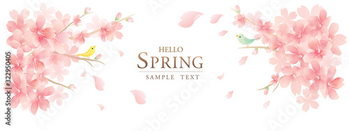 Fotografiet spring cherry blossom background モダンで上品な花のベクター背景