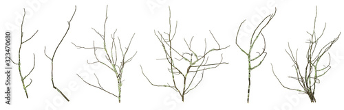 Dried mossy tree branches collection isolated on the white background Tapéta, Fotótapéta