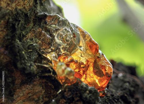 Stampa su Tela Solid tree sap on trunk macro nature detail