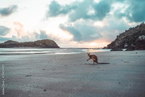 Canvas Print Kangaroo at beach against cloudy sky during sunrise